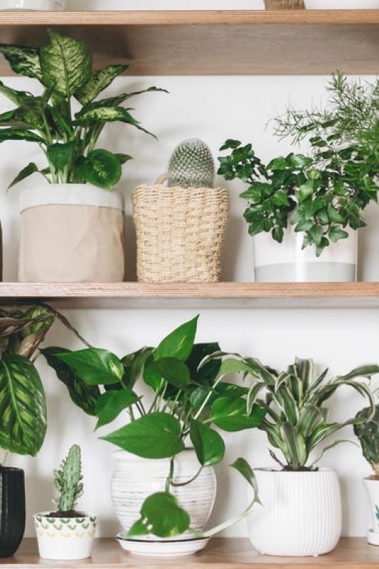 Plantenhotel